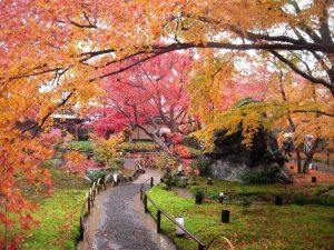 loaring-lion-garden